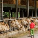 Vakantieboerderij Zuid-Limburg