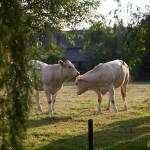 Boerderij Eyserhof Zuid-Limburg