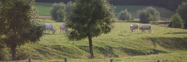 Limburgse heuvelland