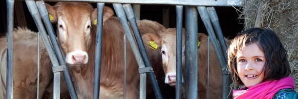 Vleesboerderij in Zuid-Limburg
